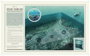 Oceana_foley_infographics-4.jpg