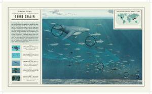 Oceana_foley_infographics-6.jpg